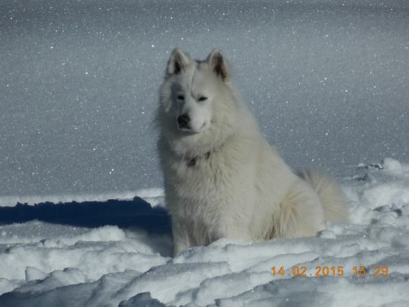 NOT a polar bear, just the dog of another hiker group :)