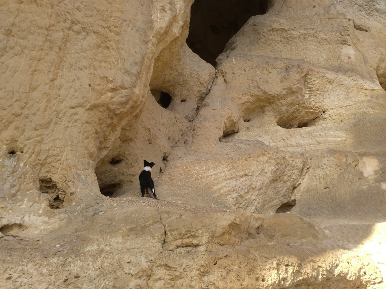 Little dogo was unable to climb over in the cave