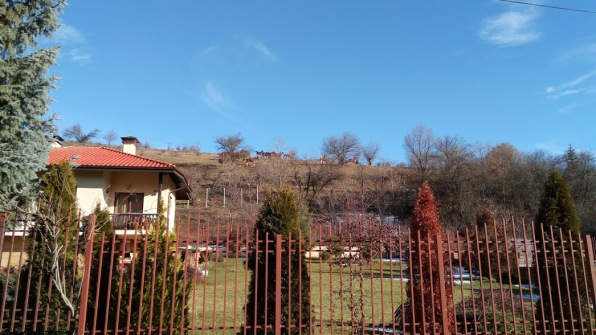 Do you see the horses at the top of the hill?